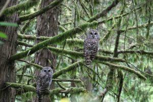 owl-2650635-JamesHills